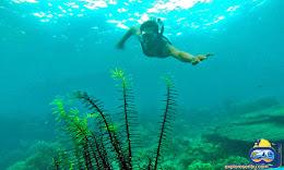 selam permukaan di wisata pulau harapan