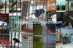 Penyebab Burung Ngedrop Di Lapangan Dan Penanganannya