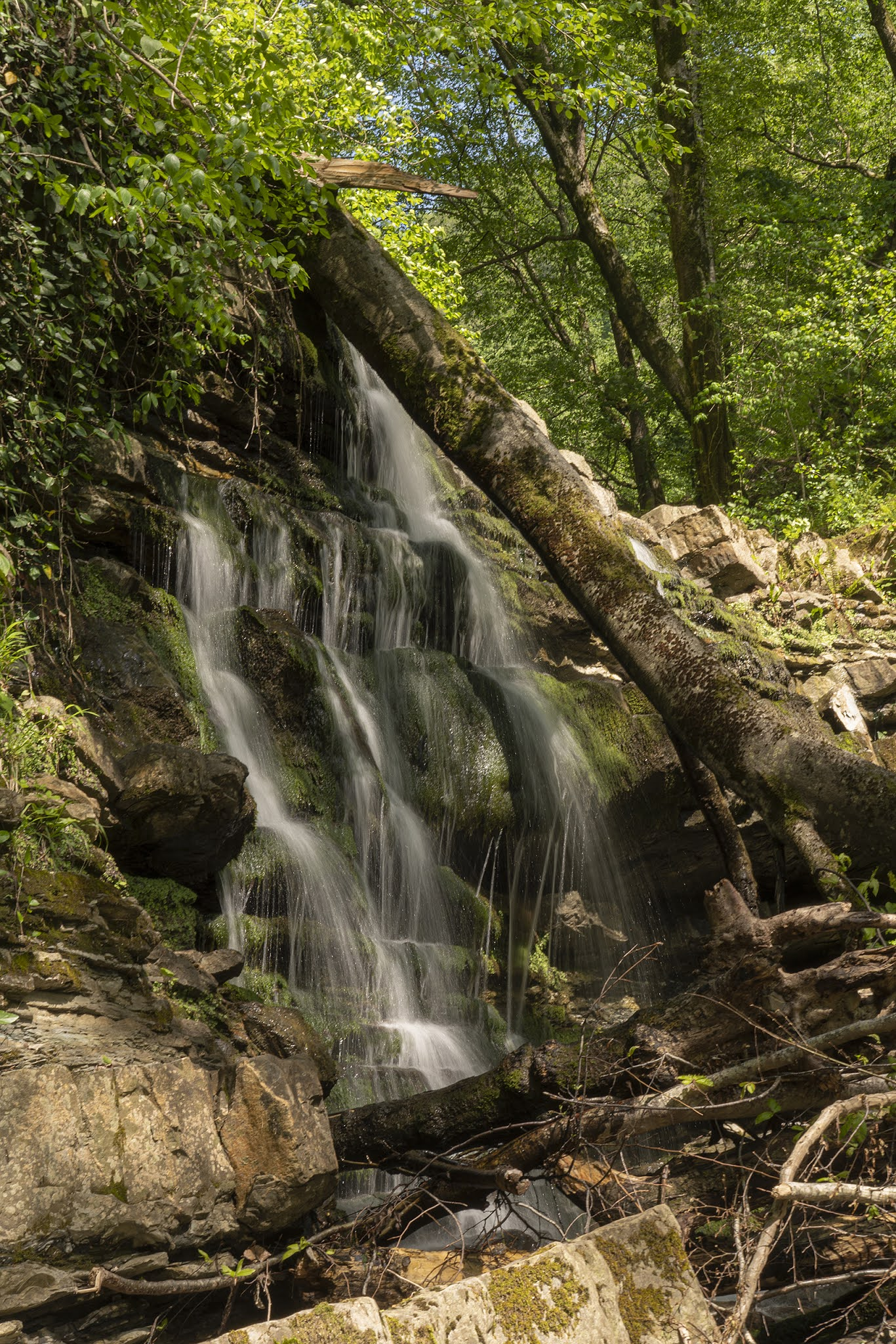 waterfall river forest Sochi Dagomys south nature photo Igor Novik