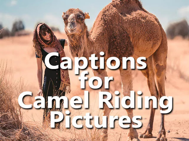 best short funny Camel Instagram Captions & Camel Quotes Sayings Puns Phrases for a pic of riding camel Instagram Photo Pics and selfies with friends.