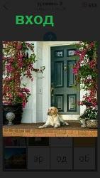 около входа в дом лежит собака и охраняет двер