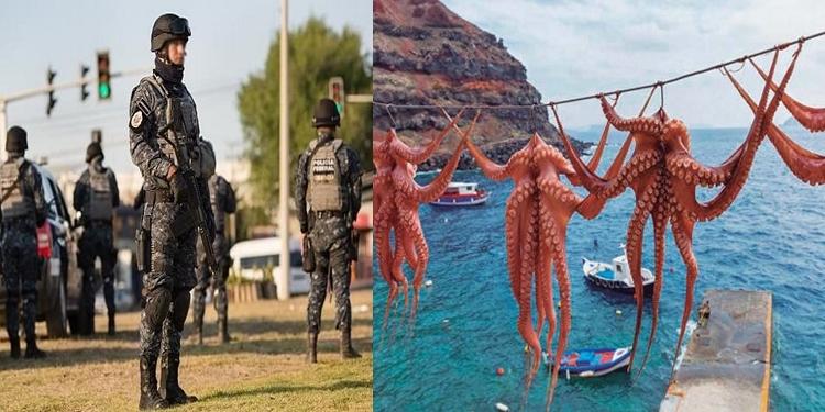 Los Cárteles de México extienden sus tentáculos a un inesperado manjar del mar