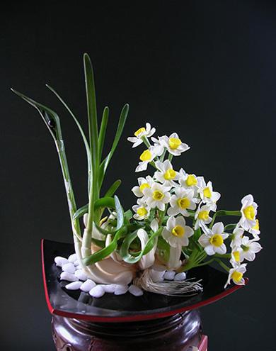 hoa thuy tien 4