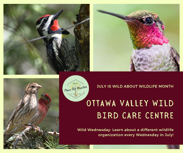 Wild Wednesday: Ottawa Valley Wild Bird Care Centre rehabilitation centre dedicated to birds