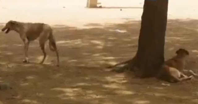Insecurity: Katsina state government deploys dogs to secure boarding schools (Video)