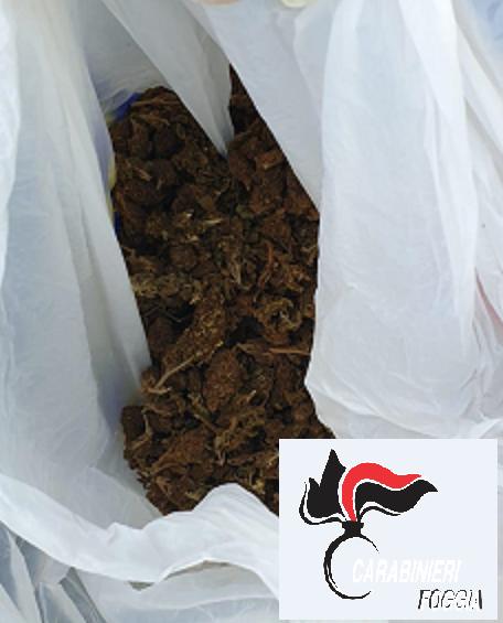 Vieste (FG), i Carabinieri sequestrano oltre mezzo kg di marijuana