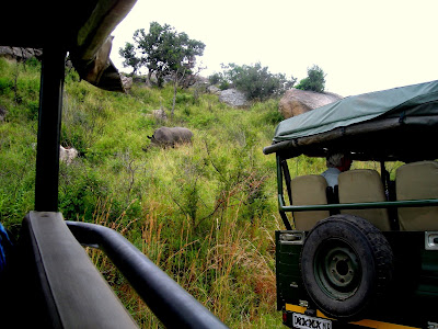 Kruger National Park, rhino, safari, safari vehicle, South Africa