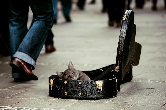 Cats don't like human music