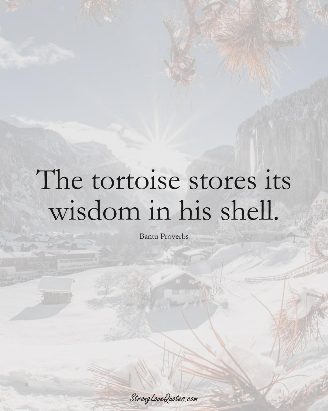 The tortoise stores its wisdom in his shell. (Bantu Sayings);  #aVarietyofCulturesSayings