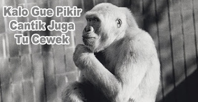 gambar monyet sedang berfikir