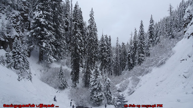 Mt. Hood National Forest in Winter