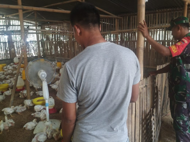 Peternak Ayam Manisrenggo Di Datangi Babinsa