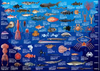 『深海大全 A1ポスター』