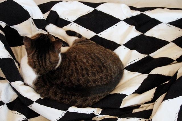 Kissa pedissä