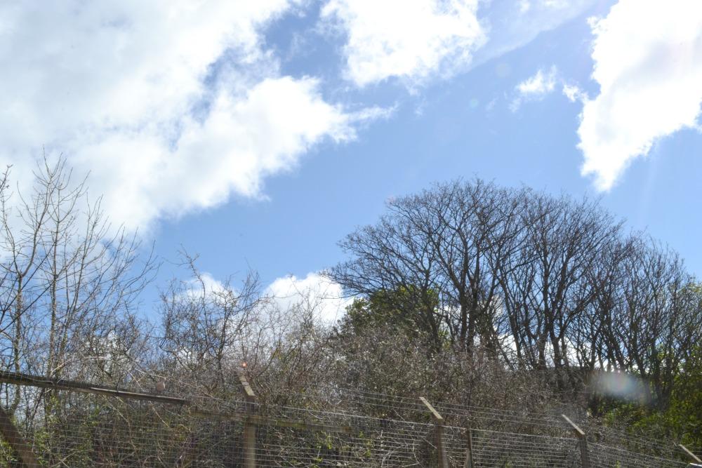 sunshine scotland trees outside