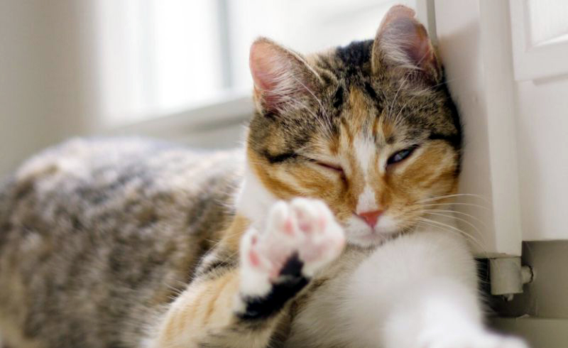 Does Your Cat Blink Around You? That Means You Make Them Feel Comfortable, Research Says