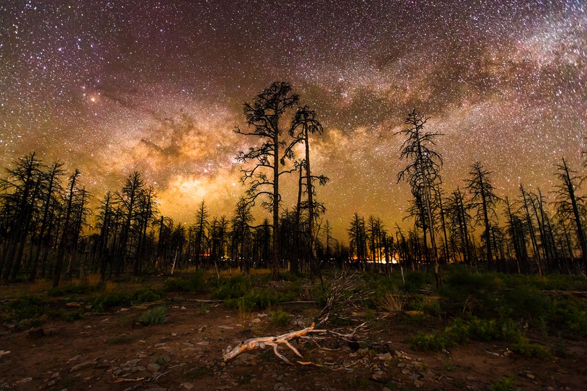 Foreground indah foto di tengah hutan