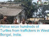 http://sciencythoughts.blogspot.com/2019/01/police-seize-hundreds-of-turtles-from.html