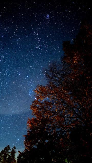 Night, stars, tree, starry sky