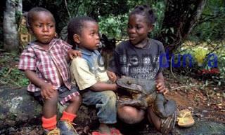 Kodok Berukuran Raksasa dari Afrika