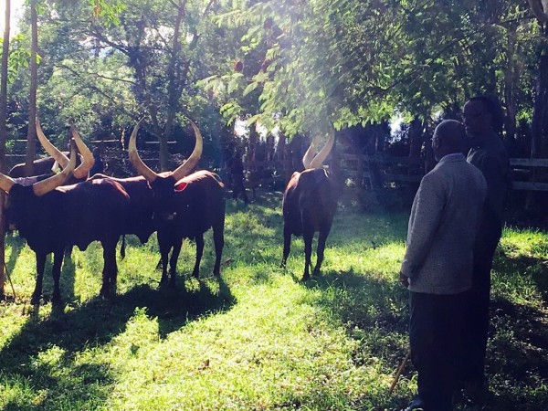 President Kagame Awarded President Magufuli with five Cows