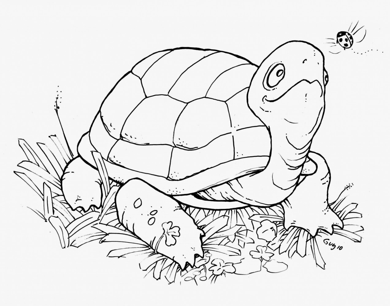 free turtle coloring pages | Coloring Pages: Turtles Free Printable Coloring Pages