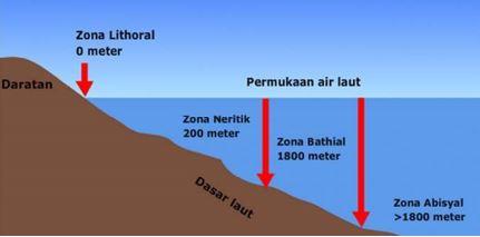 Gambar zona ekosistem air laut menurut kedalaman, Sumber: dunia.pendidikan.co.id
