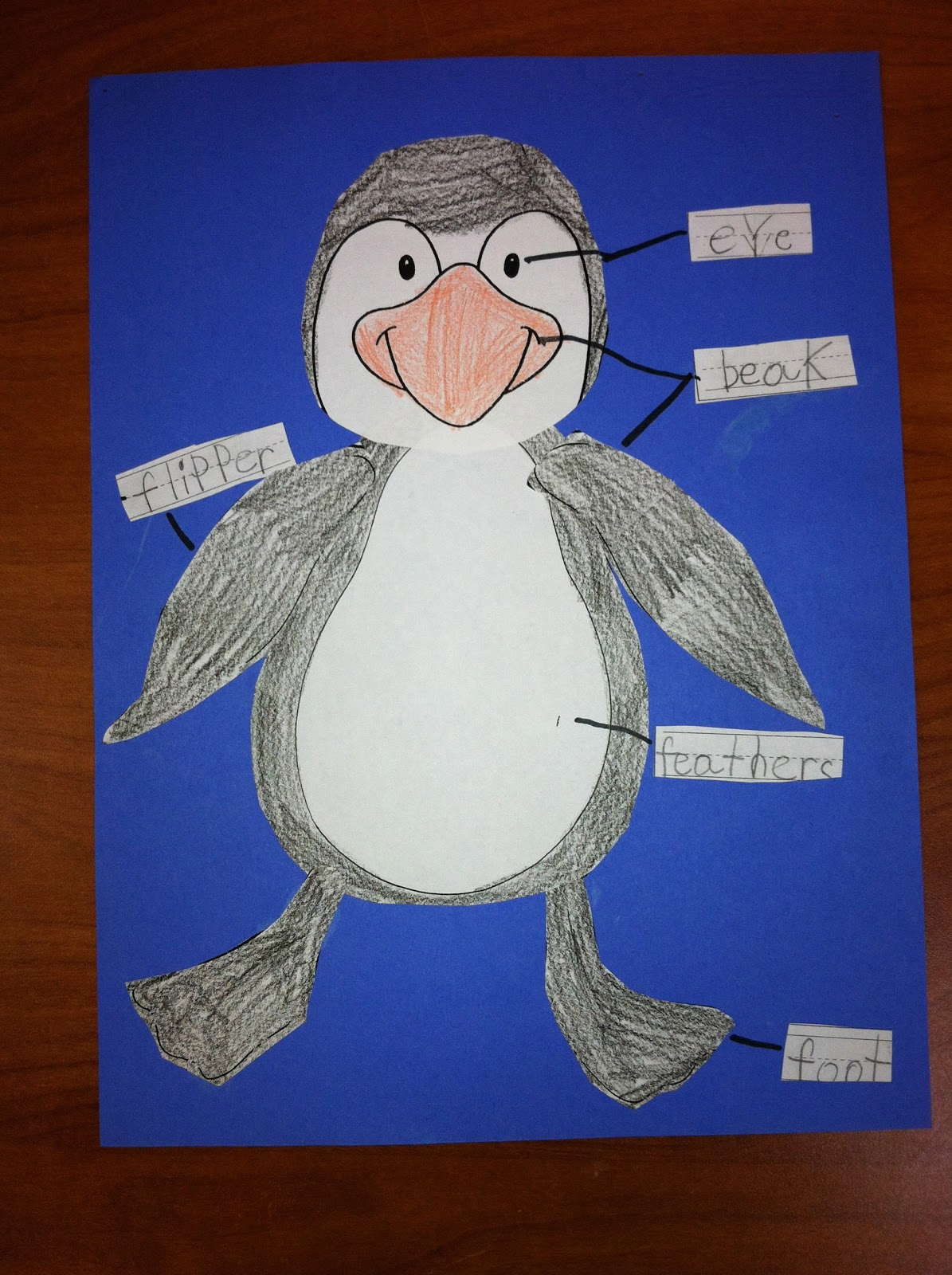 Parts Of A Penguin Images