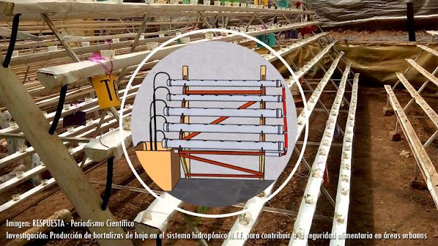 Producción de hortalizas de hoja en el sistema hidropónico N.T.F. para contribuir a la seguridad alimentaria en áreas urbanas