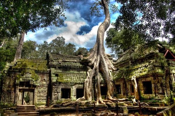 Đền Ta Prohm gây ấn tượng với những cây cổ thụ hình thù lạ mắt