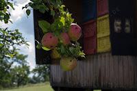 http://fineartfotografie.blogspot.de/2014/09/die-welt-der-bienen-aus-der-nahe.html