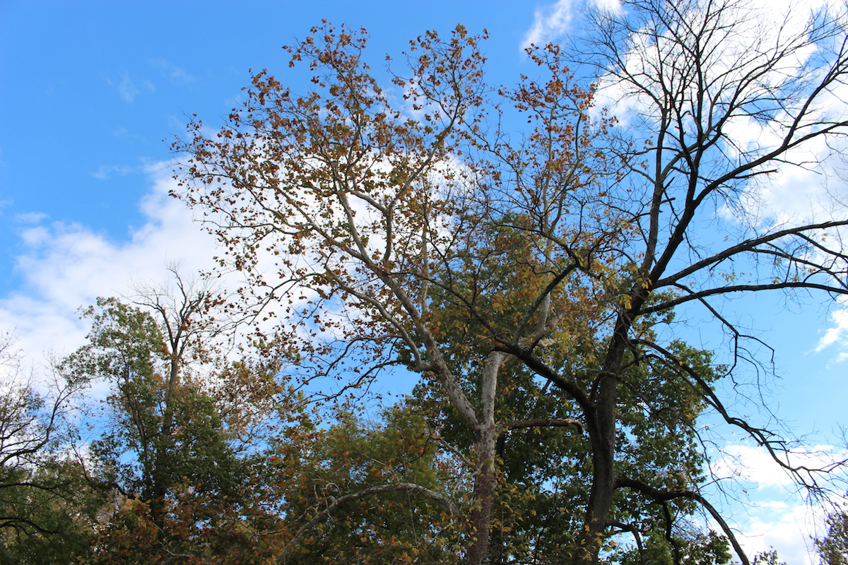 This photo shows the beautiful blue skies in Brandywine Park.