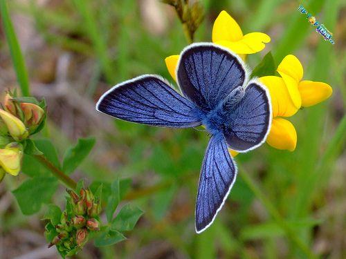 Vivien's: 10 Most Beautiful Species of Butterflies  Vivien's: 1...