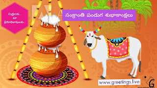 Pongal greetings with Bull and pongal pots