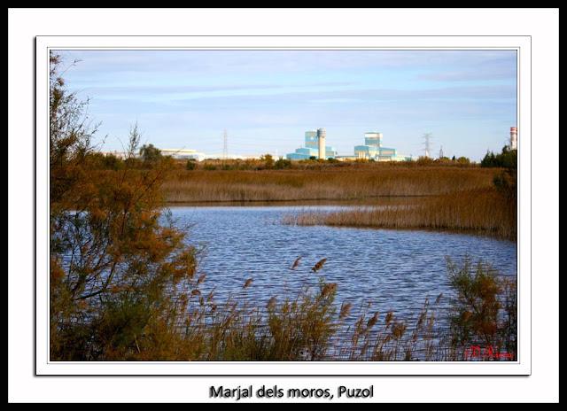 La_marjal_dels_moros-Puzol-Vicente_Riera_Peiro