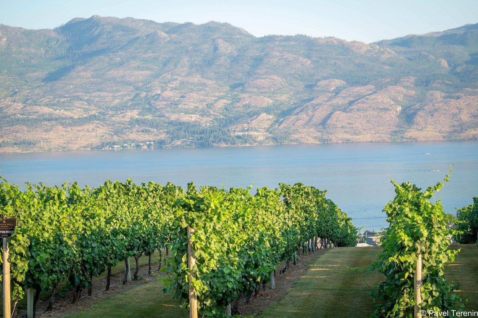 Живописные виноградники раскинулись здесь по берегам озера.