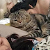 Woman says this cat stole her husband and they all live under the same roof