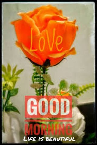 Download good morning flowers with messages