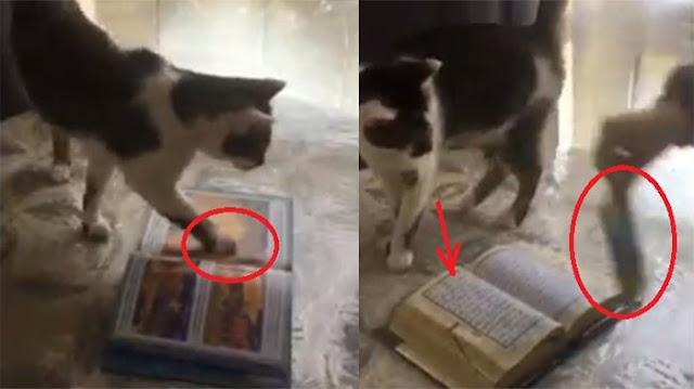 Dipancing Pakai Makanan Kucing Ini Injak Buku, Begitu Diganti Al Quran, Subhanallah. . .