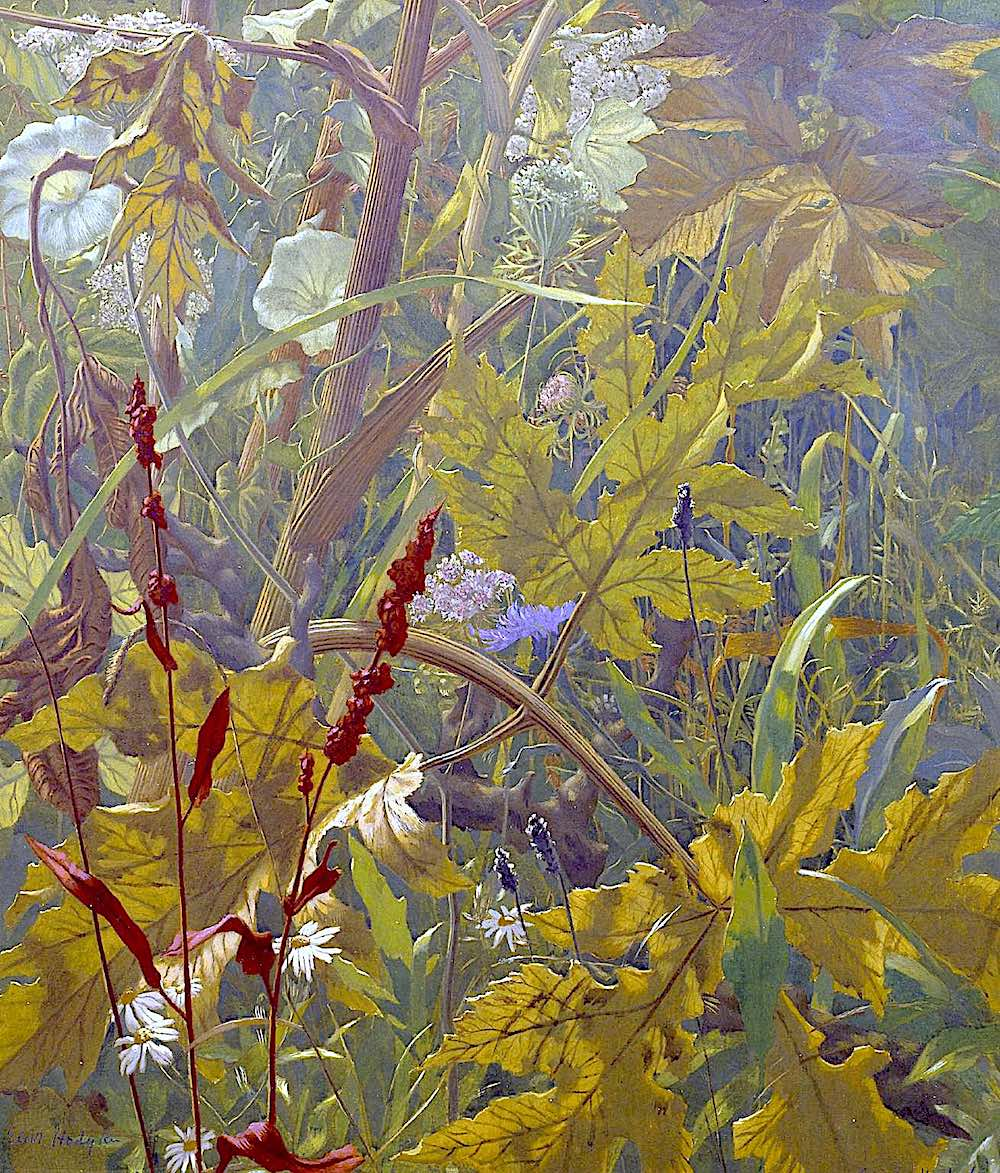 Eliot Hodgkin art 1941, a wild natural field at low level