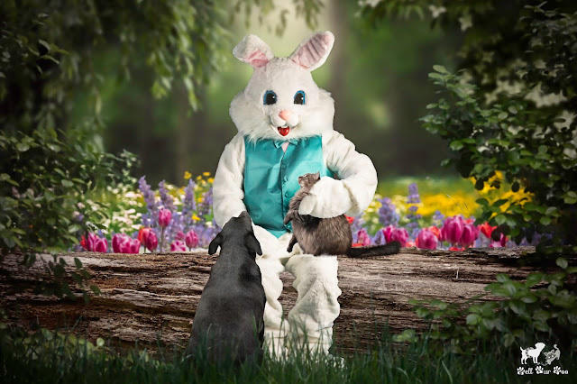 Matt & Matilda Visiting The Easter Bunny (©Jenny Bell @ Bell Fur Zoo)