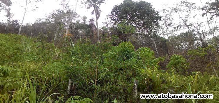 Kandungan Karbon Pada Ekosistem Hutan