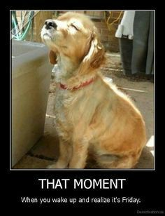 TGIF Quotes, Tgif meme Dog