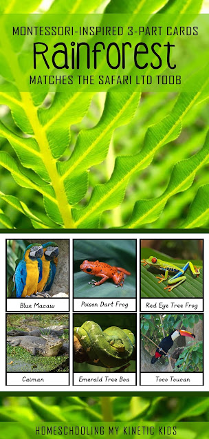 These Montessori-inspired 3-part cards match the Safari Ltd Rainforest animals toob.  The figurines are great for sensory bins, messy play, small world play, and more!  Use the cards for reading, spelling, and matching games.