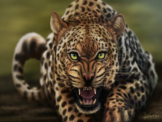 Leopard download besplatne pozadine za desktop 1152x864