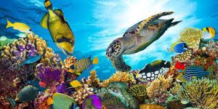 Cientistas israelenses desenvolvem corais impressos em 3D para combater a degradação de habitats marinhos