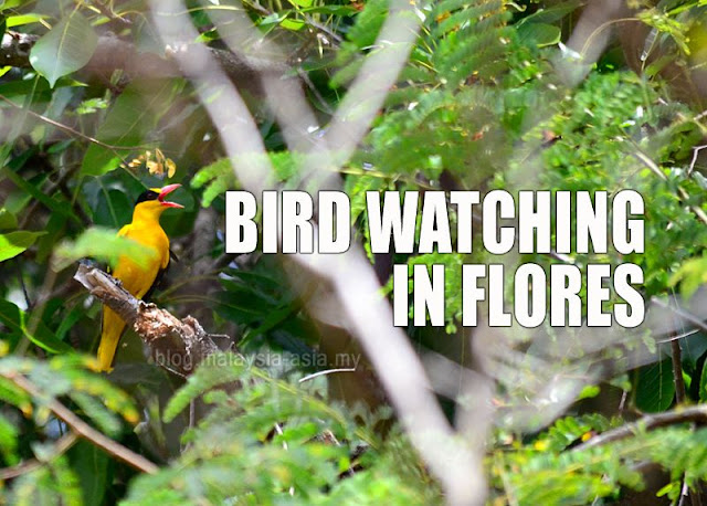 Flores Bird Watching