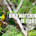 Bird Watching in Flores