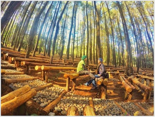 Hutan Pinus Mangunan;10 Top Destinasi Wisata Bantul