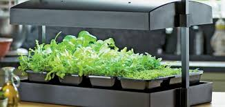 AeroGarden Indoor Garden